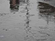 13th Jan 2021 - Wet 1
