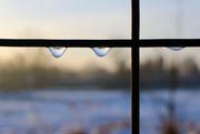 20th Jan 2021 - Zmrzlé kapky na plotě