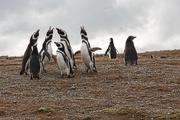 20th Jan 2021 - Happy Penguin Appreciation Day!