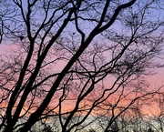 20th Jan 2021 - A Colorful Sunset