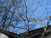 20th Jan 2021 - Bird in Backyard