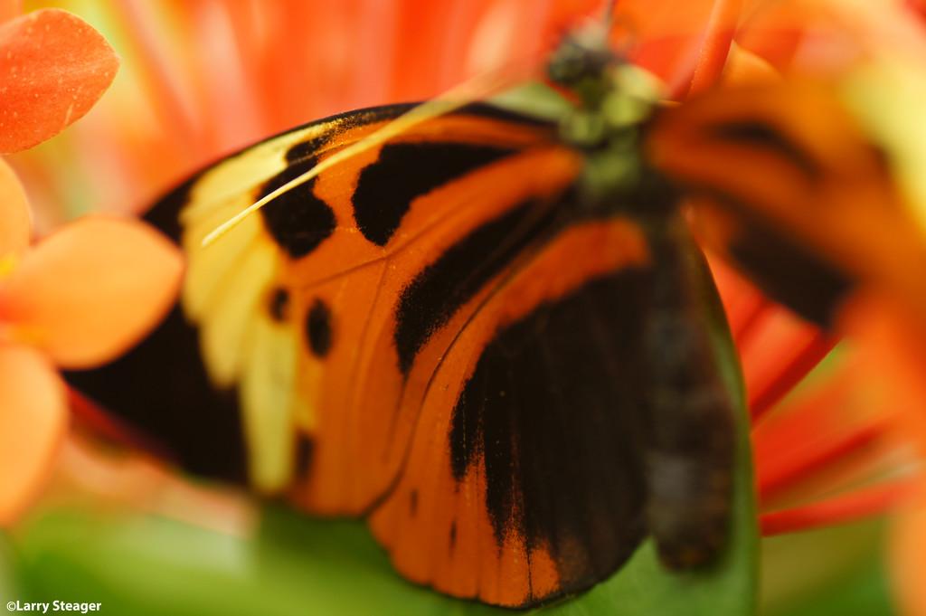 Butterfly wing by larrysphotos
