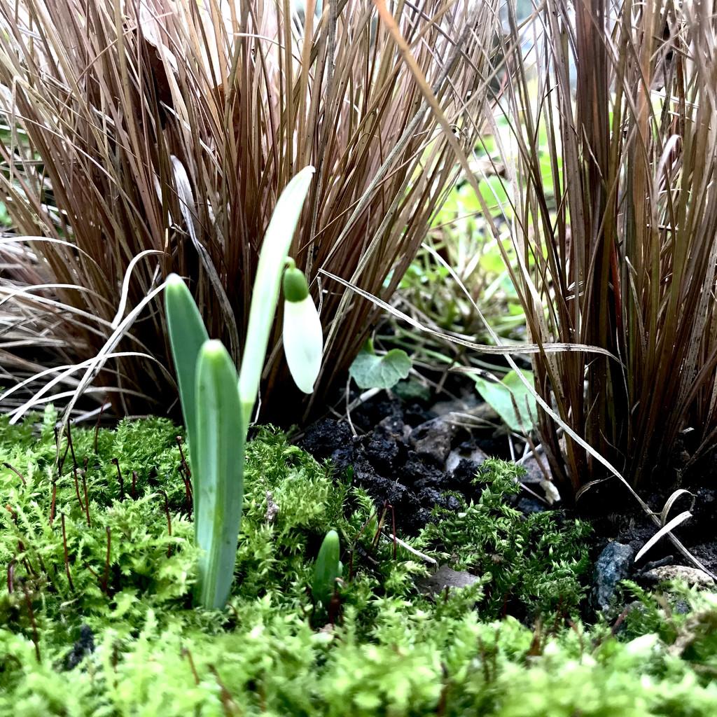 Silently by daffodill