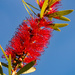 Bottle Brush Up High!