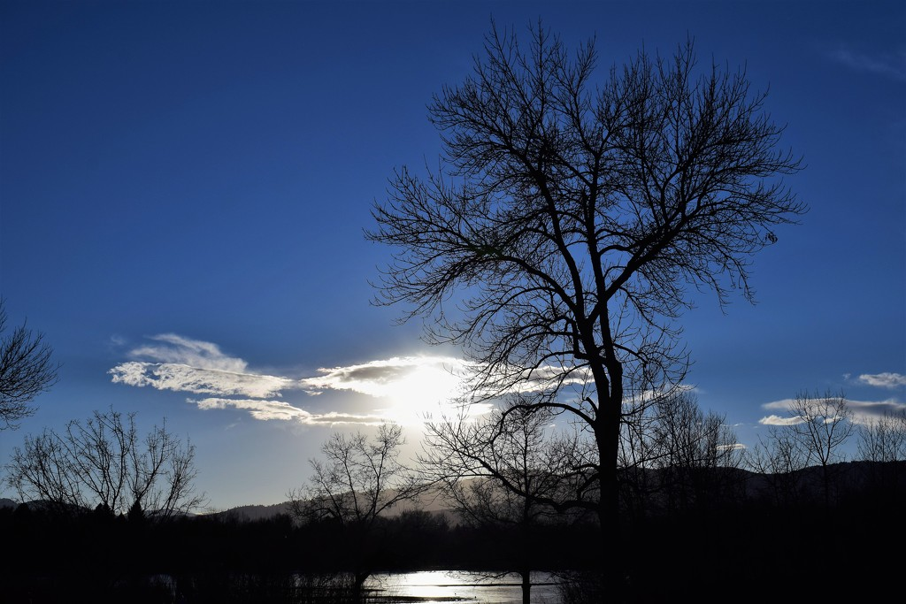 Tree, cloud and lake by sandlily