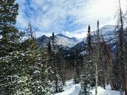 20th Jan 2021 - Colorado Winter