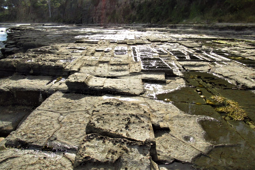Tessellated Pavement.. by robz