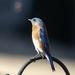 Bluebird Smiling at Me
