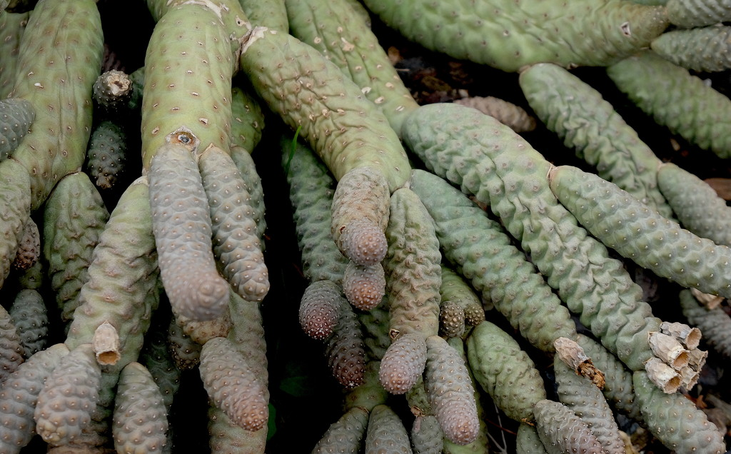 Cactus Fingers by redy4et