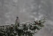 21st Jan 2021 - Posing Pigeon