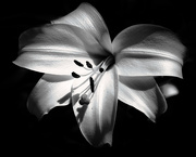 20th Jan 2021 - Black and White in the style of Ansel Adams