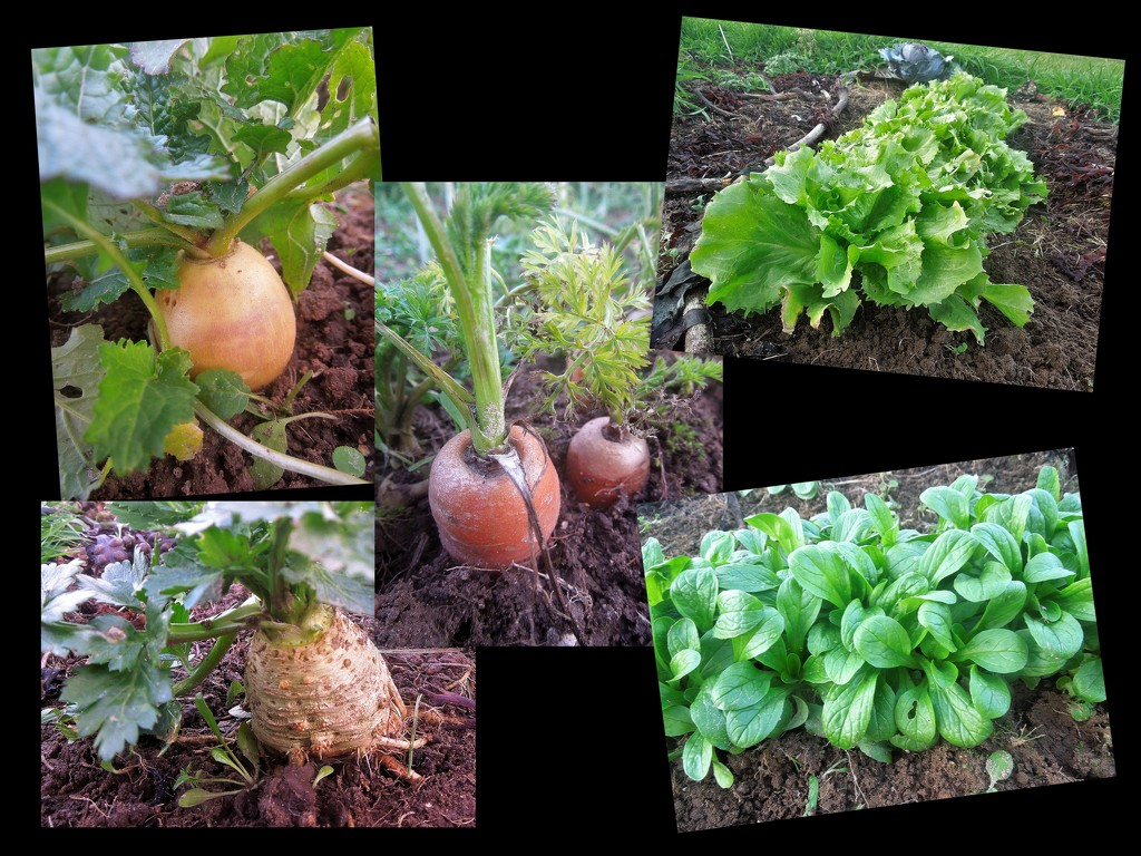 The vegetable garden in January by etienne