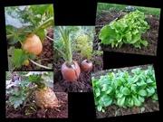 21st Jan 2021 - The vegetable garden in January