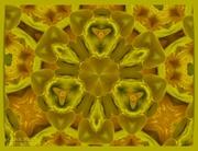 21st Jan 2021 - Daffodil Kaleidoscope