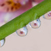 Many droplets