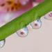 Many droplets by mv_wolfie