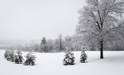21st Jan 2021 - Snow 4