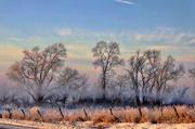 20th Jan 2021 - Winter Weather
