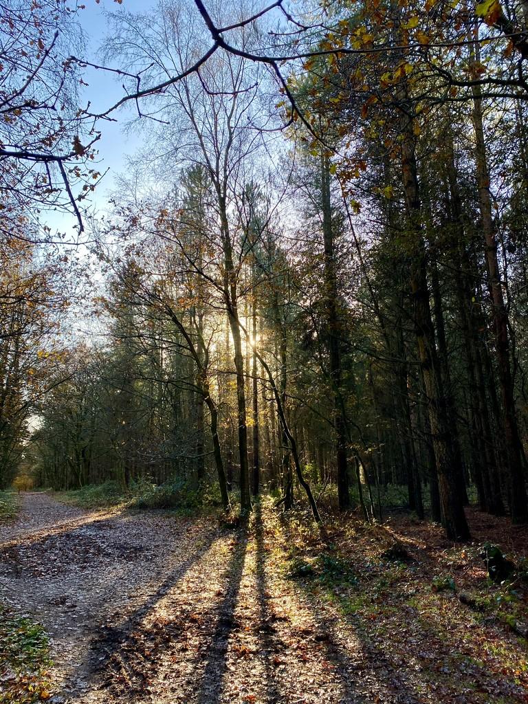 Walking In The Woods by gillian1912