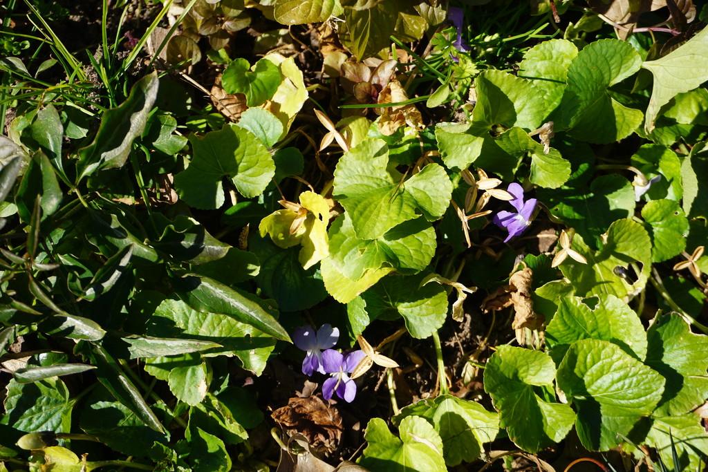 Shrinking Violets by allie912