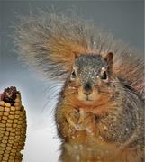 21st Jan 2021 - Happy National Squirrel Appreciation Day