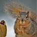 Happy National Squirrel Appreciation Day