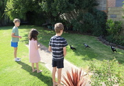 21st Jan 2021 - The magpie feeders