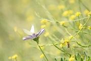 10th Jan 2021 - Butterfly