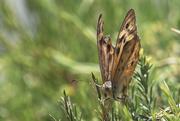 13th Jan 2021 - Butterfly