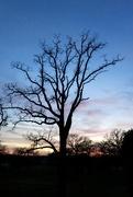 22nd Jan 2021 - Blue skies, nothing but blue skies
