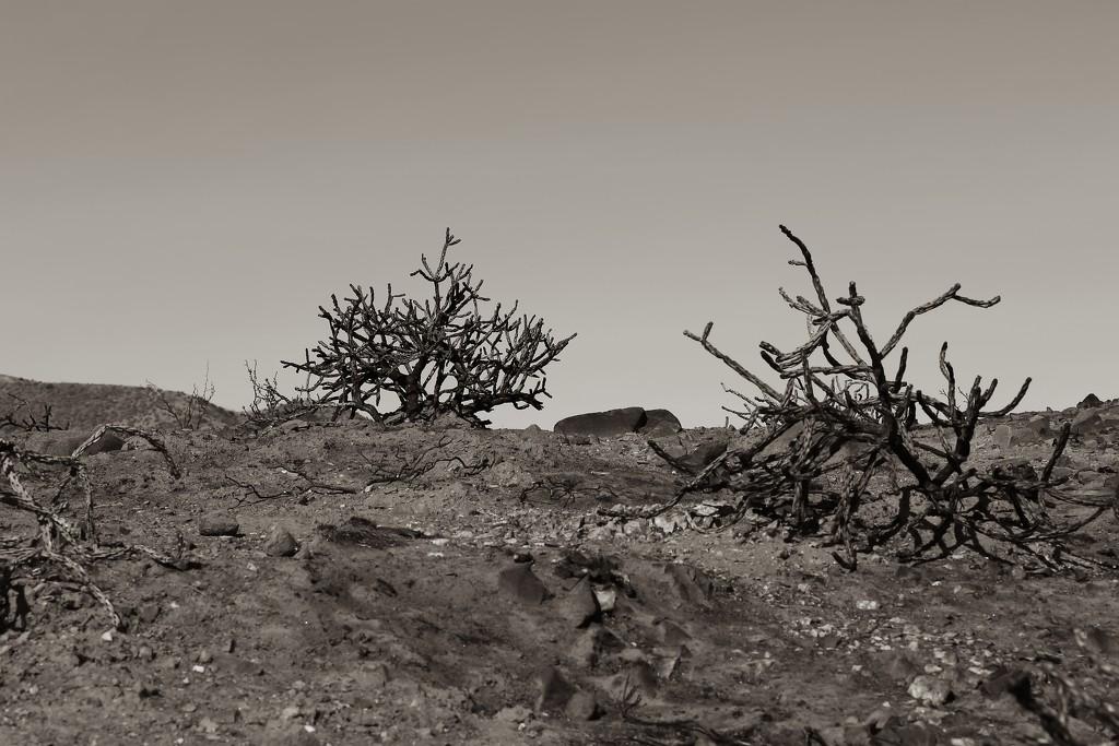 landscape by blueberry1222