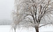 22nd Jan 2021 - Snow 5