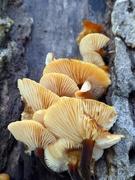 20th Jan 2021 - Fungi