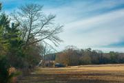 21st Jan 2021 - Rural scene...