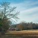 Rural scene...