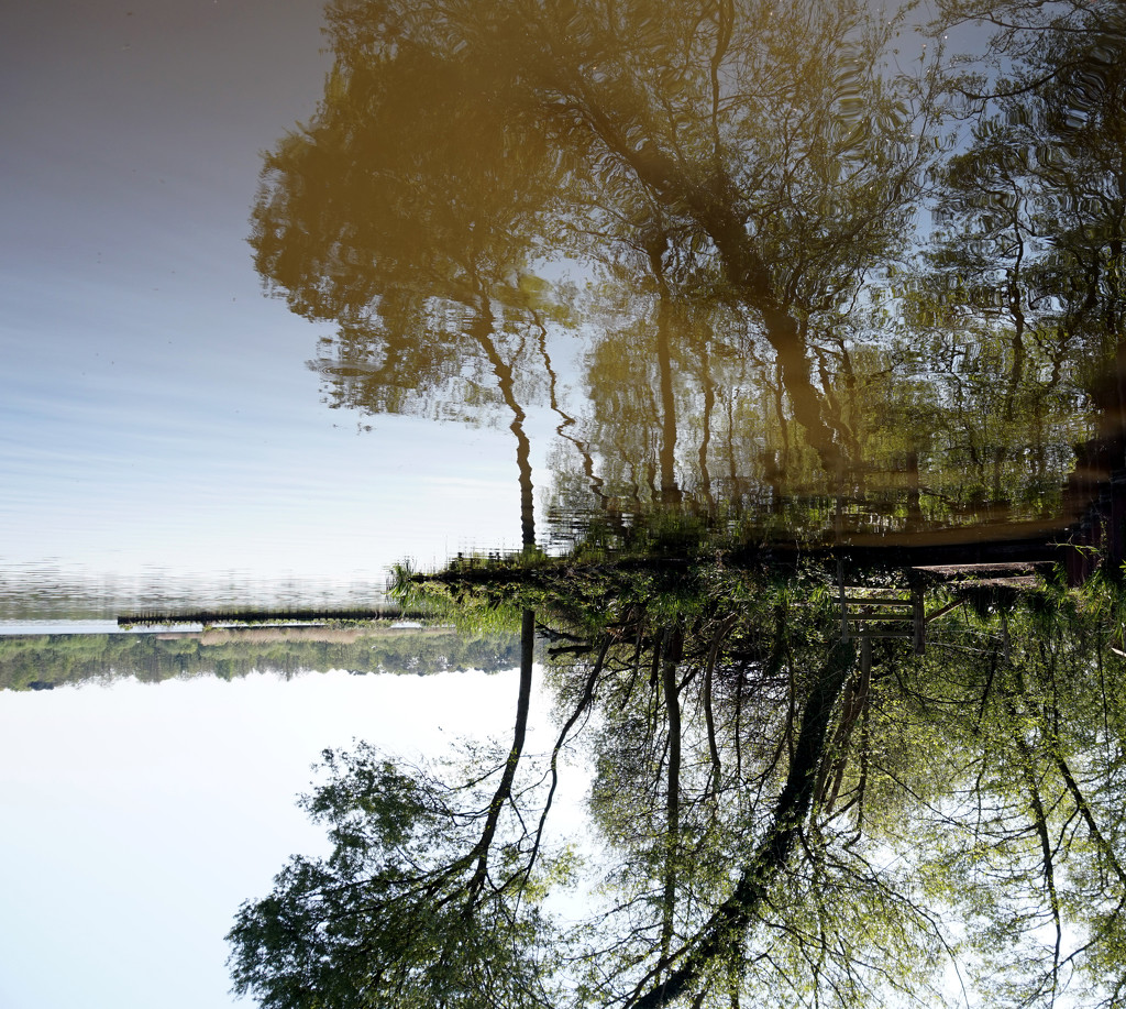 Jan 21st The Pond, reflected by valpetersen