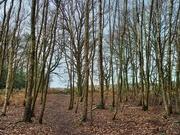 20th Jan 2021 - 20th Jan A Walk Through The Woods