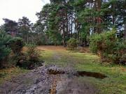 17th Jan 2021 - 17th Jan A Bit Muddy