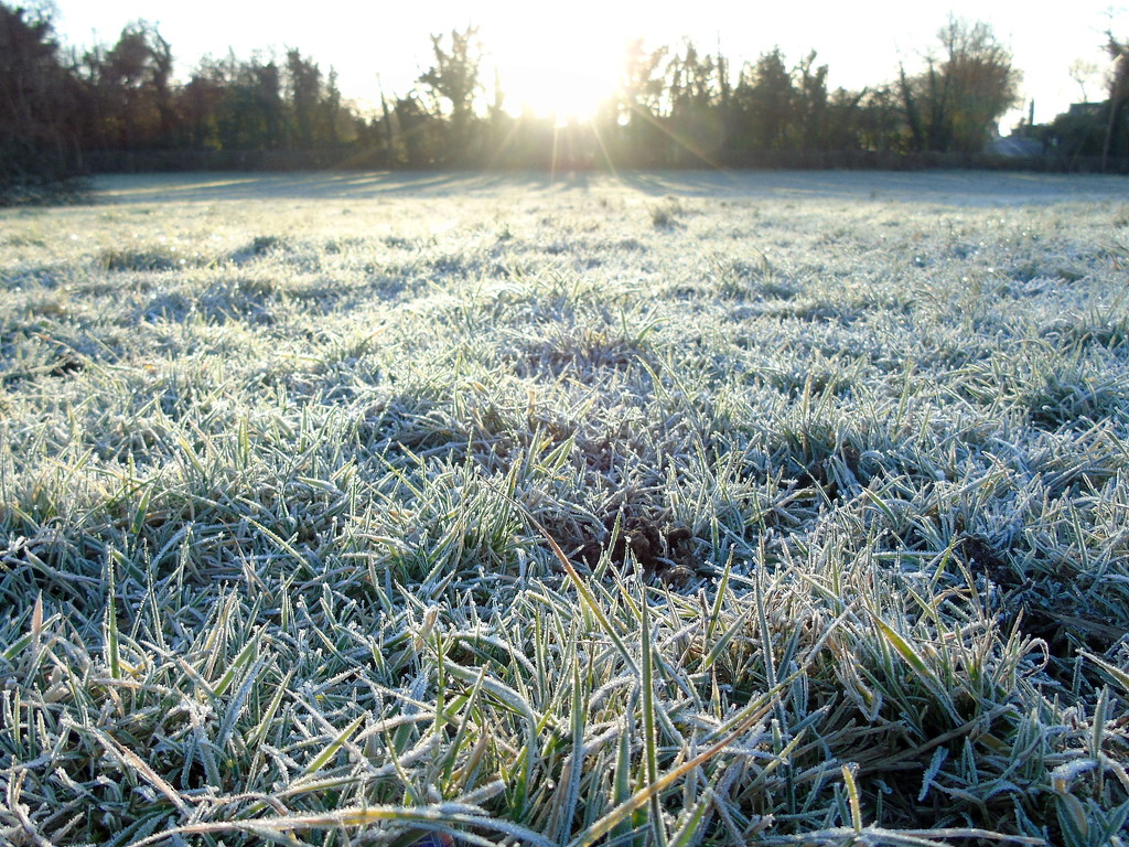 Morning Frost by bulldog