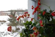 22nd Jan 2021 - Květiny na okně
