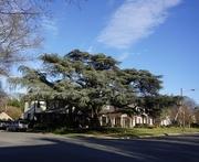 23rd Jan 2021 - A Favorite Tree