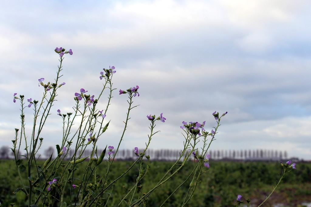 Manure crop.  by pyrrhula