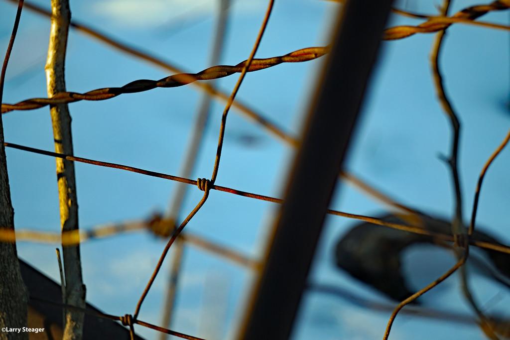 Wire by larrysphotos