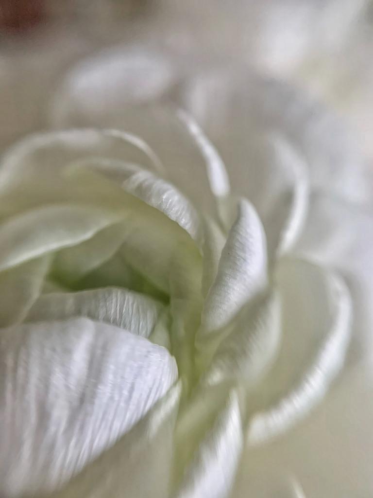White.  by cocobella