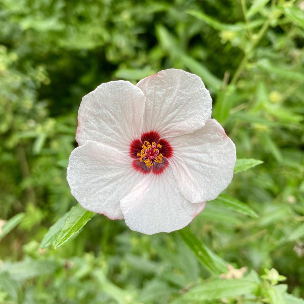 Flower by kjarn