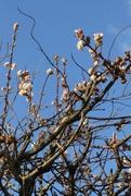 22nd Jan 2021 - Early bloom