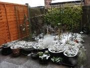 14th Jan 2021 - Snow in My Garden