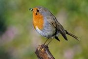 23rd Jan 2021 - A BIRD ON A STICK