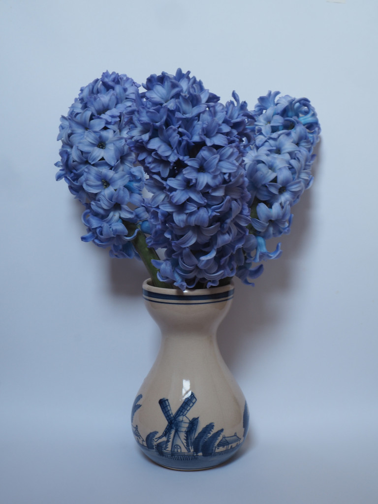 hyacinths by josiegilbert