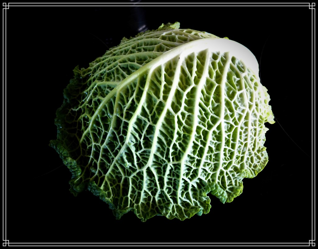 Savoy Cabbage 2 by beryl